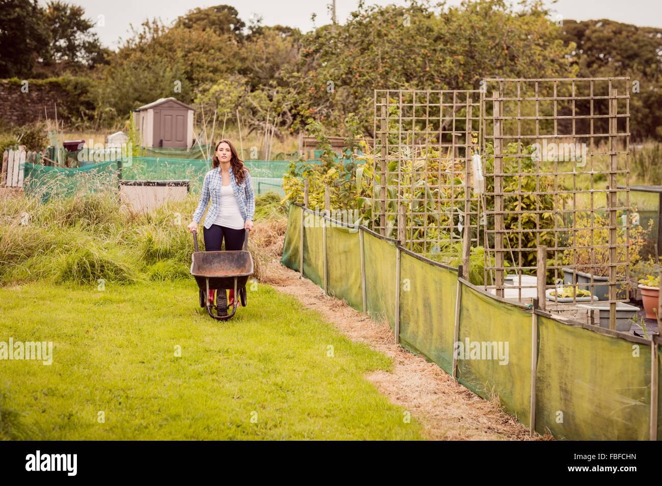Woman pushing a wheelbarrow - Stock Image