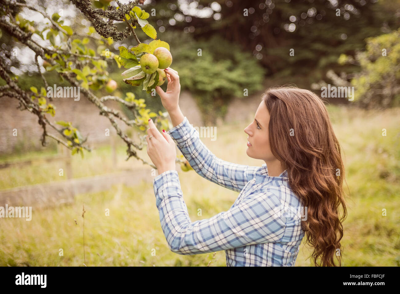 Farmer woman touching apple - Stock Image