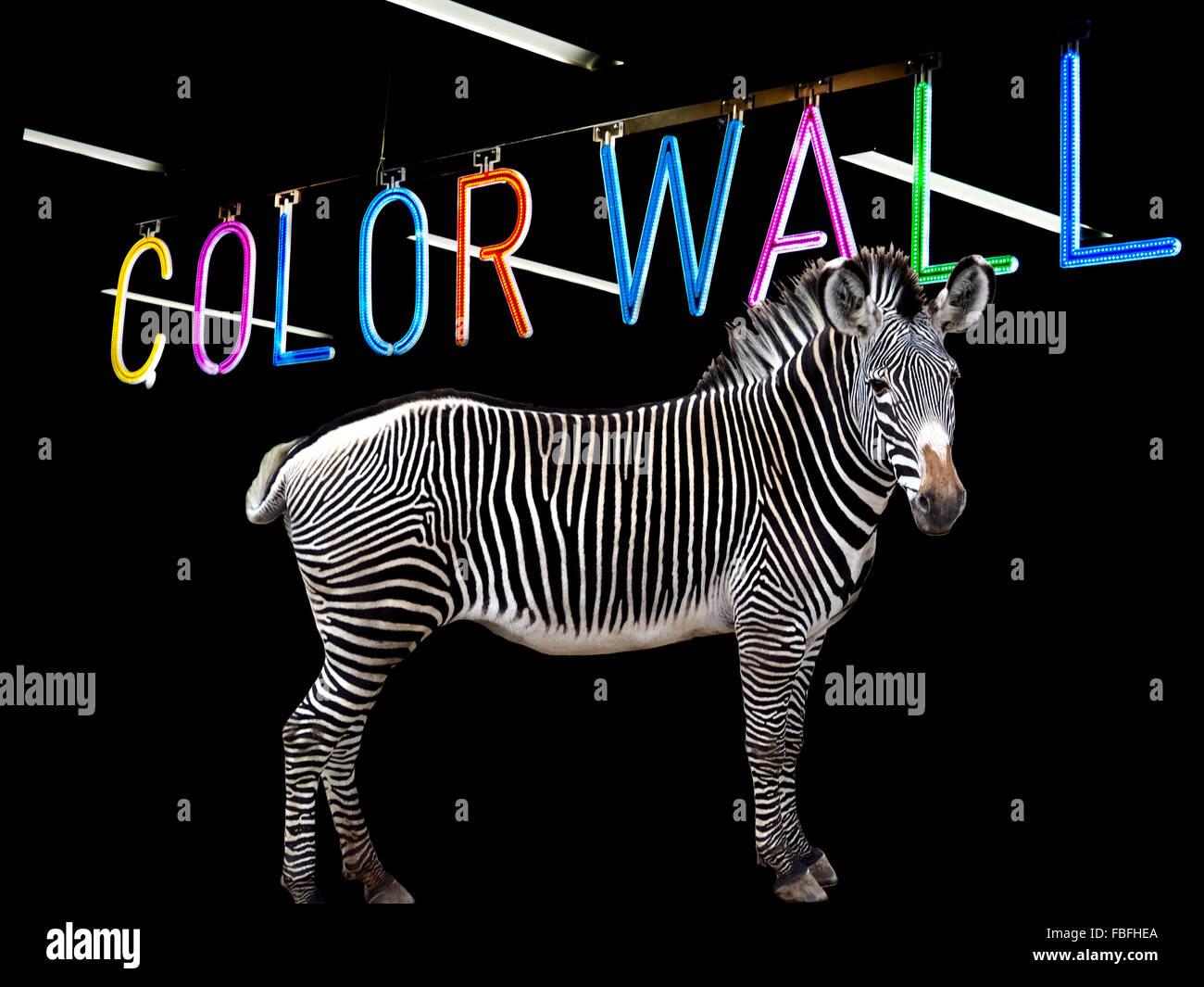 Digital Composite Image Of Zebra Against Colorful Text Against Black Background - Stock Image