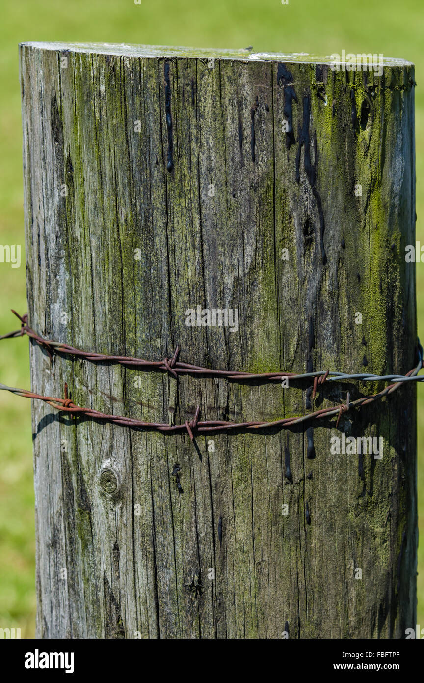 Wooden fence post wrapped with rusty barbed wire. - Stock Image