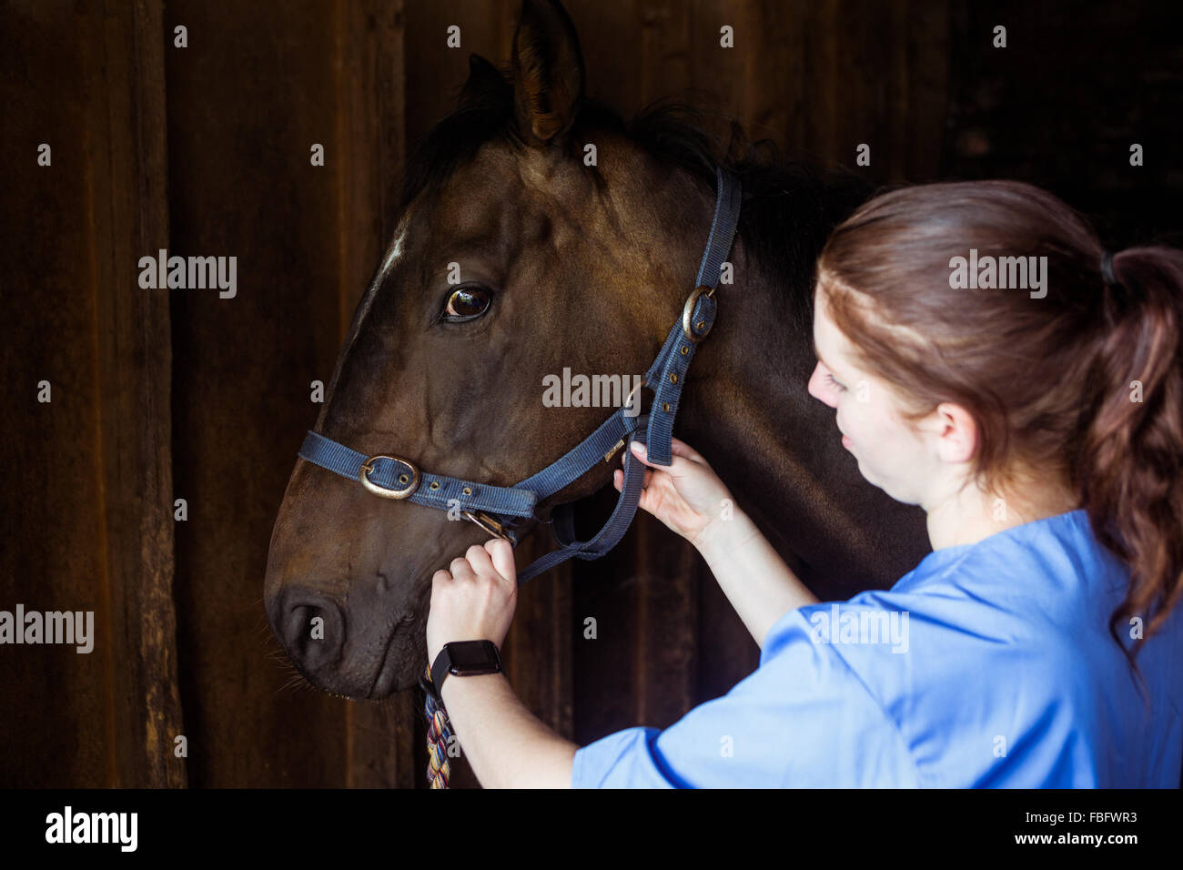 Female vet adjusting reigns Stock Photo