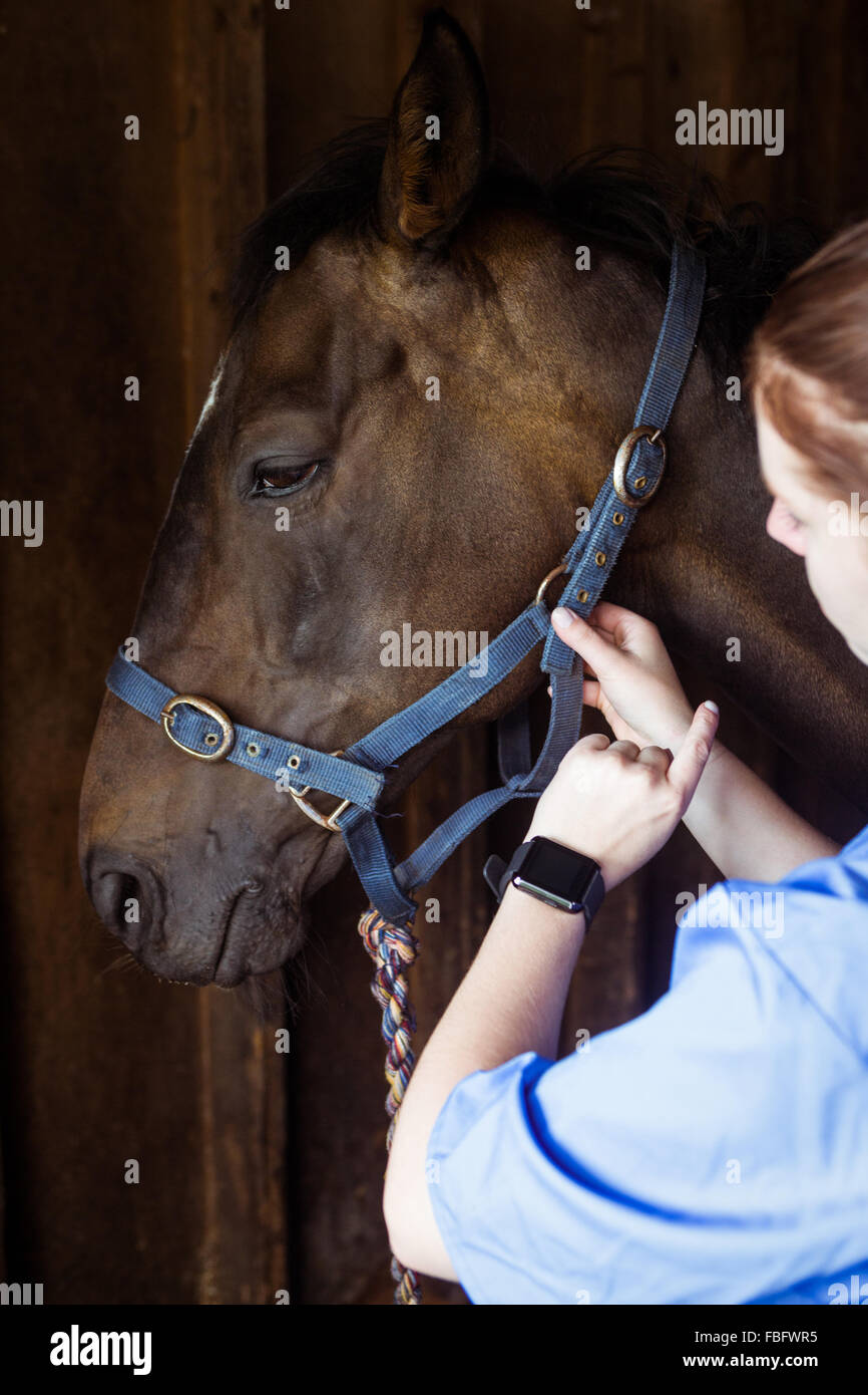 Female vet adjusting reigns - Stock Image
