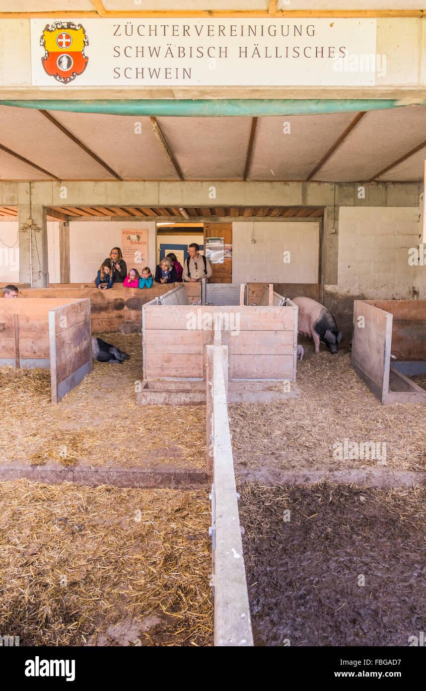 stable swabian-hall breeders association open-air museum, wackershofen, schwäbisch hall, baden-wuerttemberg, germany Stock Photo