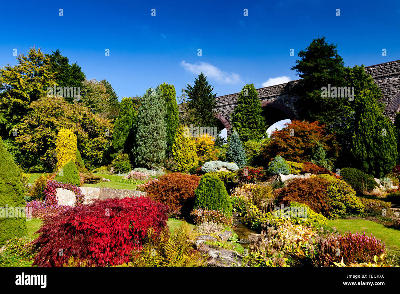 Assorted shapes and colours of conifers and a vivid red acer tree in Kilver Court Gardens, Shepton Mallet, Somerset, - Stock Image