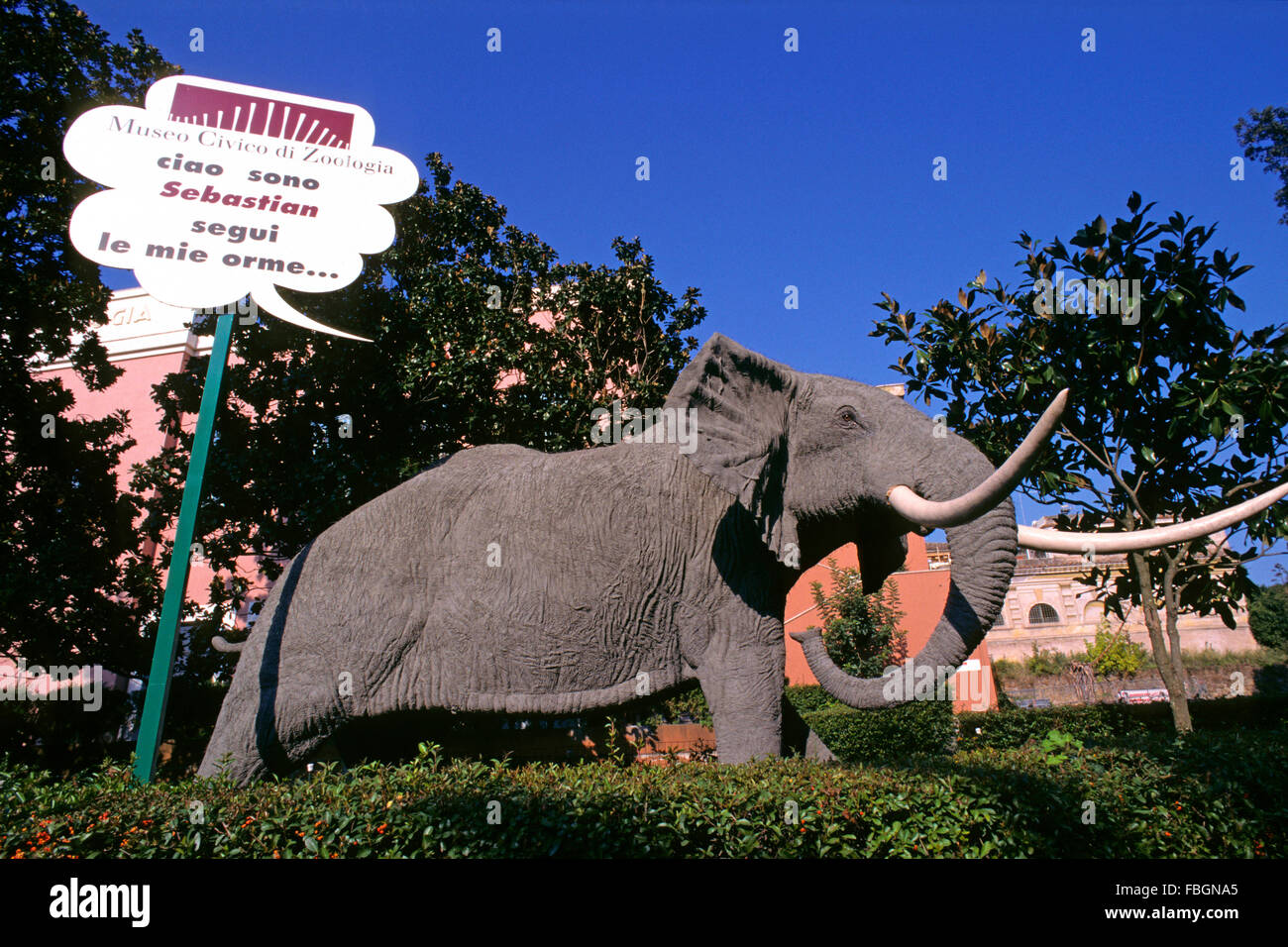 Statue of african elephant (Loxodonta africana) nearby the Zoology Museum at the Bioparco of Rome, Italy - Stock Image