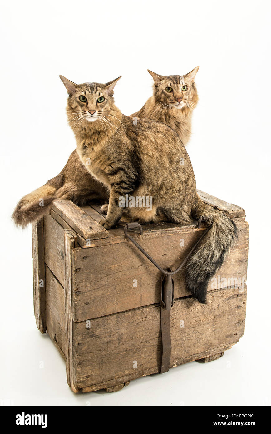 Brothers, cat, frends - Stock Image