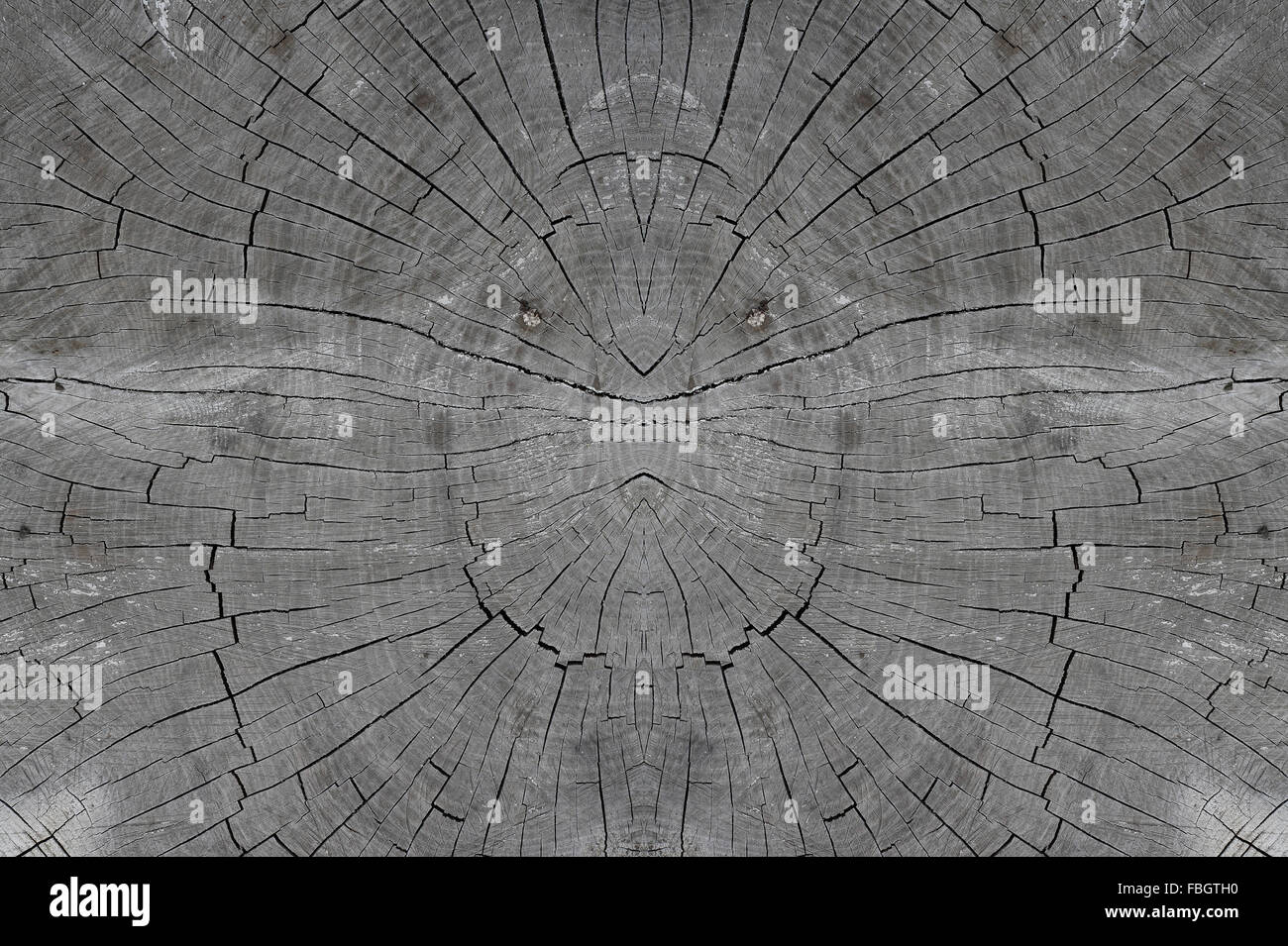 Texture of the old wooden stub for a background - Stock Image