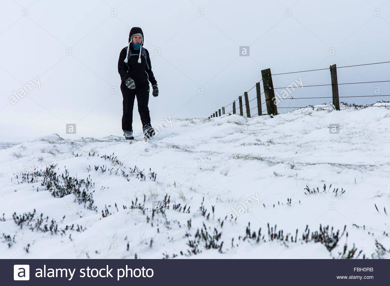 Mozie Law, Wooler, Northumberland, UK. 16th January 2016. Hill walkers on the Pennine Way just inside the English - Stock Image