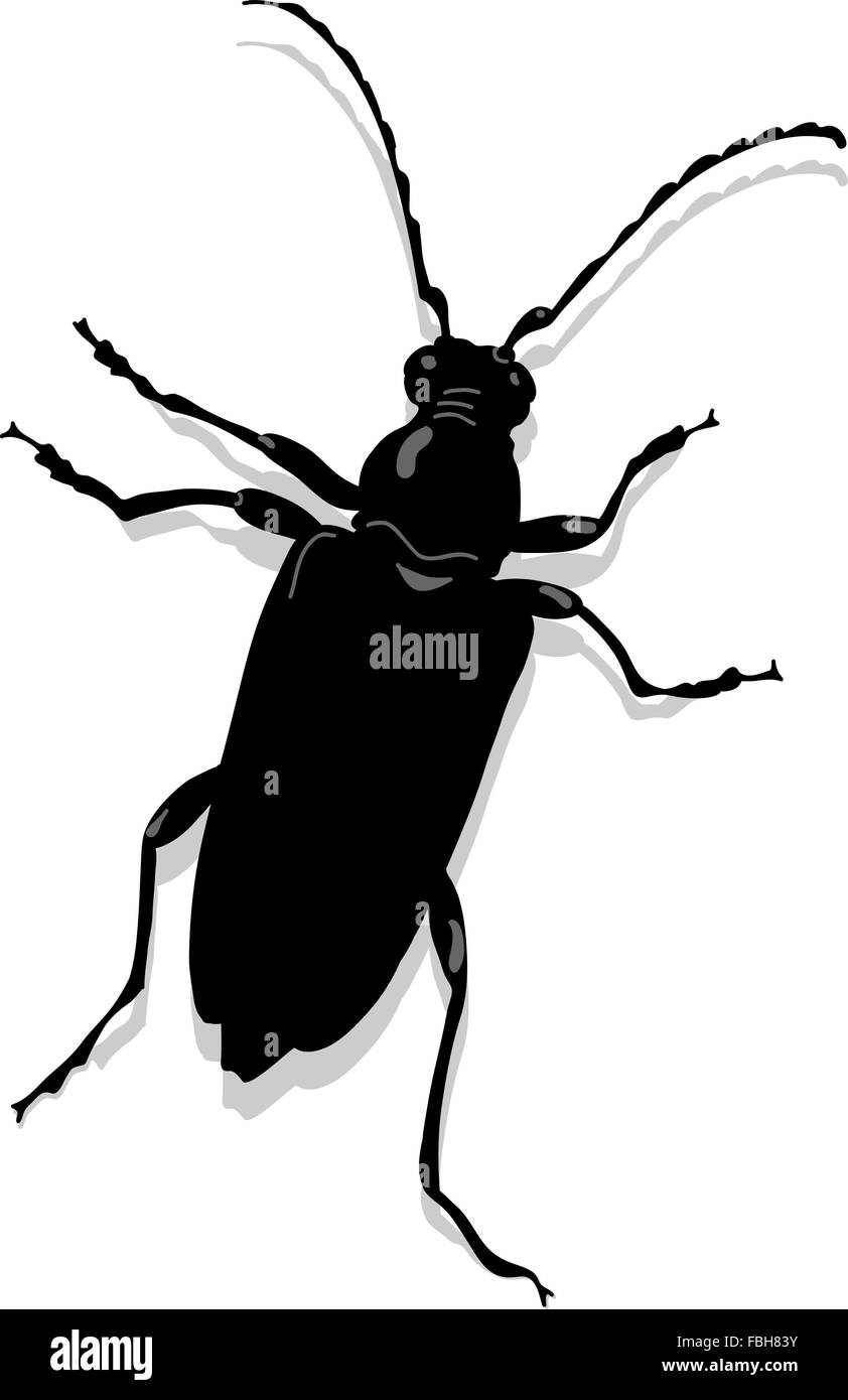 Cerambyx scopolii or capricorn beetle - Stock Vector