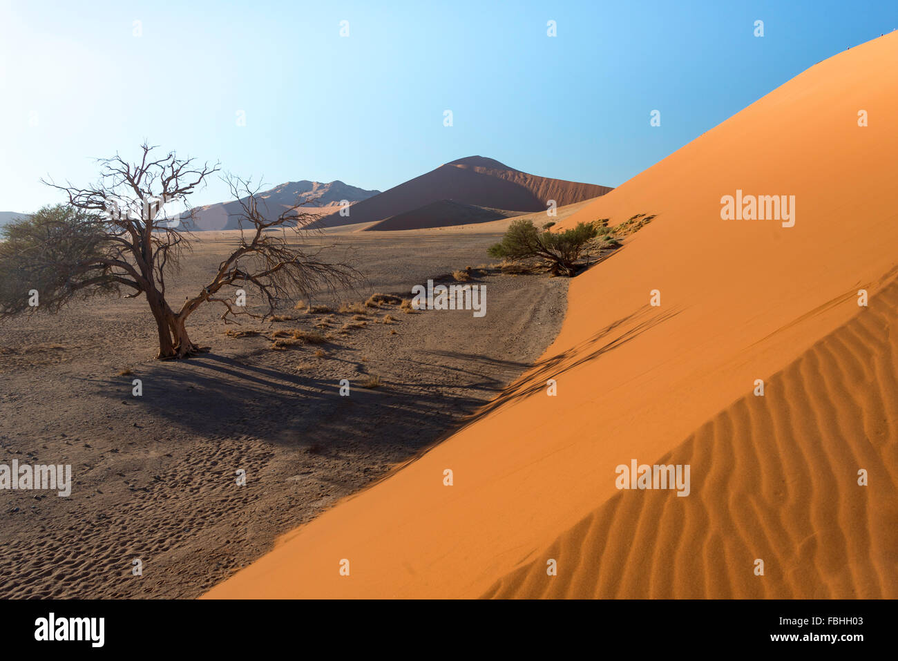 Sand dune, Sossusvlei, Namib Desert, Namib-Naukluft Park, Hardap Region, Republic of Namibia - Stock Image