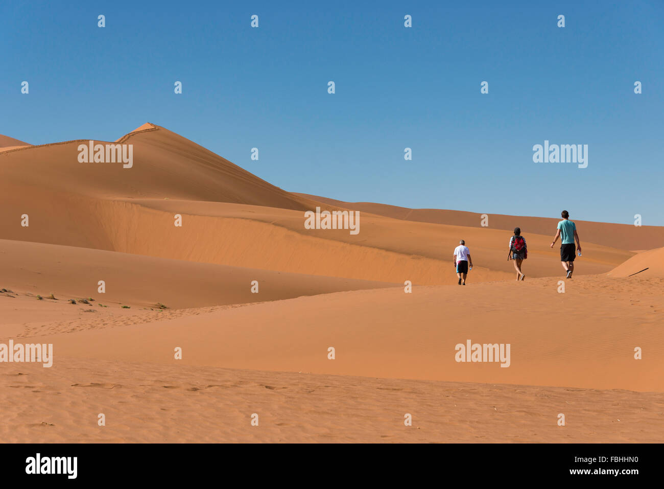 Group walking in desert, Sossusvlei, Namib Desert, Namib-Naukluft Park, Hardap Region, Republic of Namibia - Stock Image