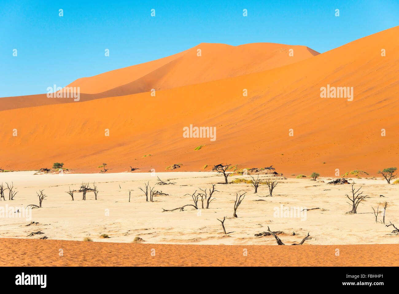 The Dead Viei (DeadVlei) Pan, Namib-Naukluft National Park, Sossusviei, Namib Desert, Hardap Region, Republic of - Stock Image