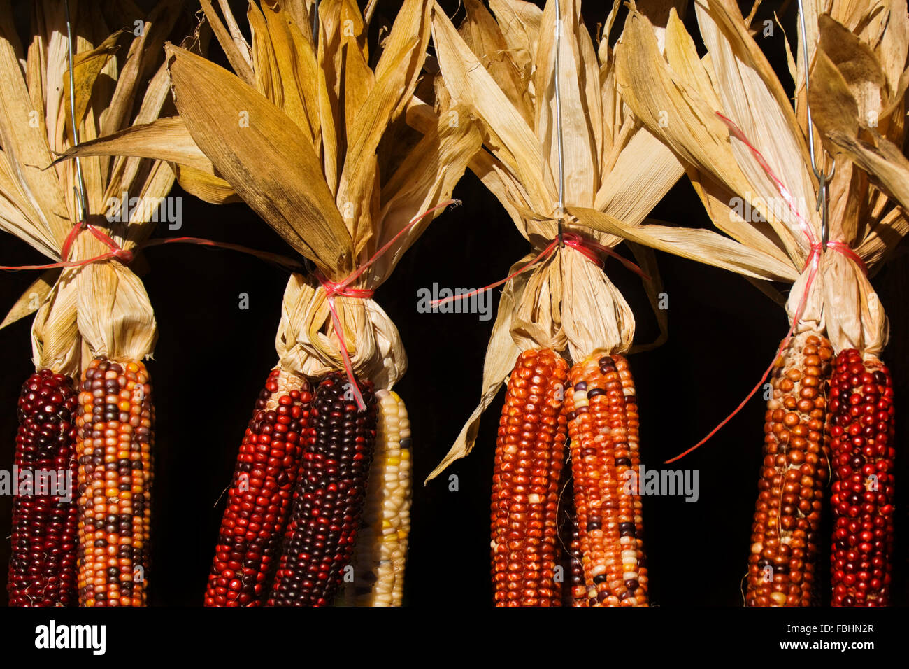 Hanging ears of Indian corn in an open farmers market - Stock Image