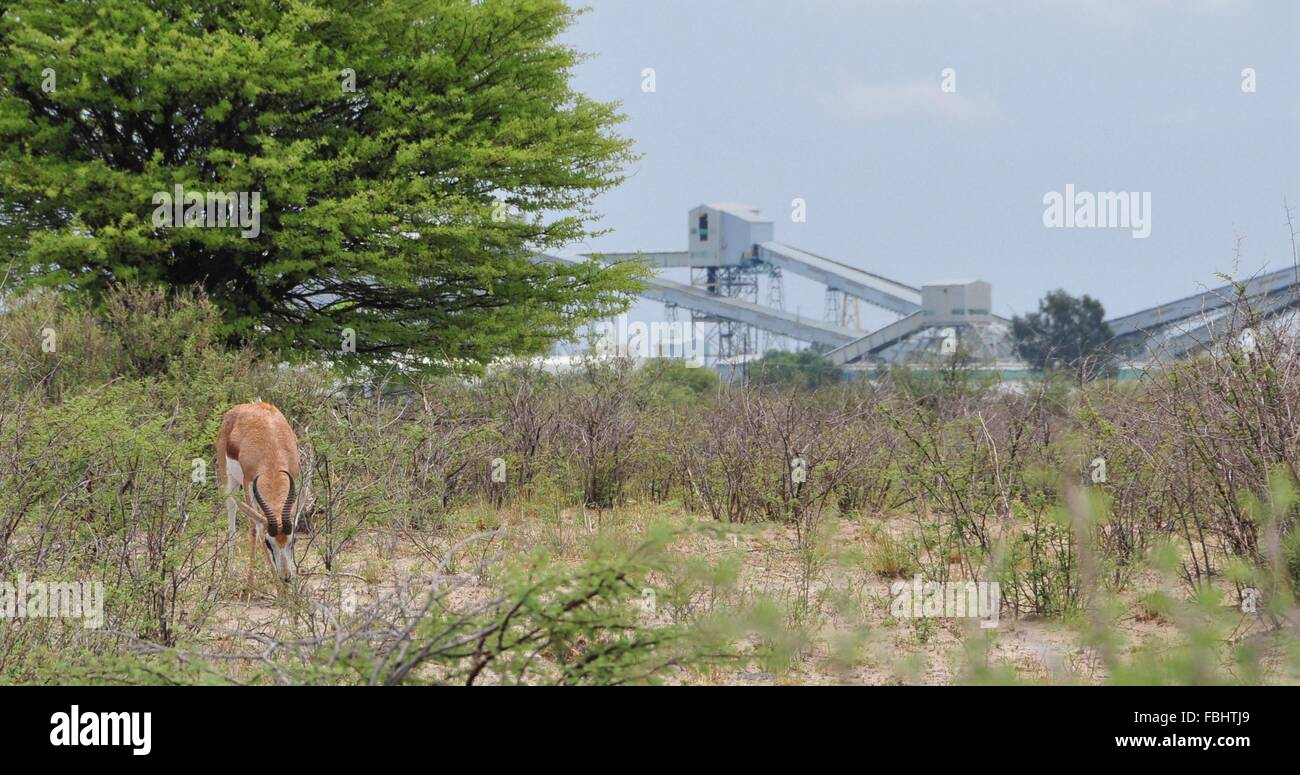 Jwaneng, Botswana. 16th Jan, 2016. A sprinbok is seen in Jwana Game Park within the boundaries of the Jwaneng mining - Stock Image