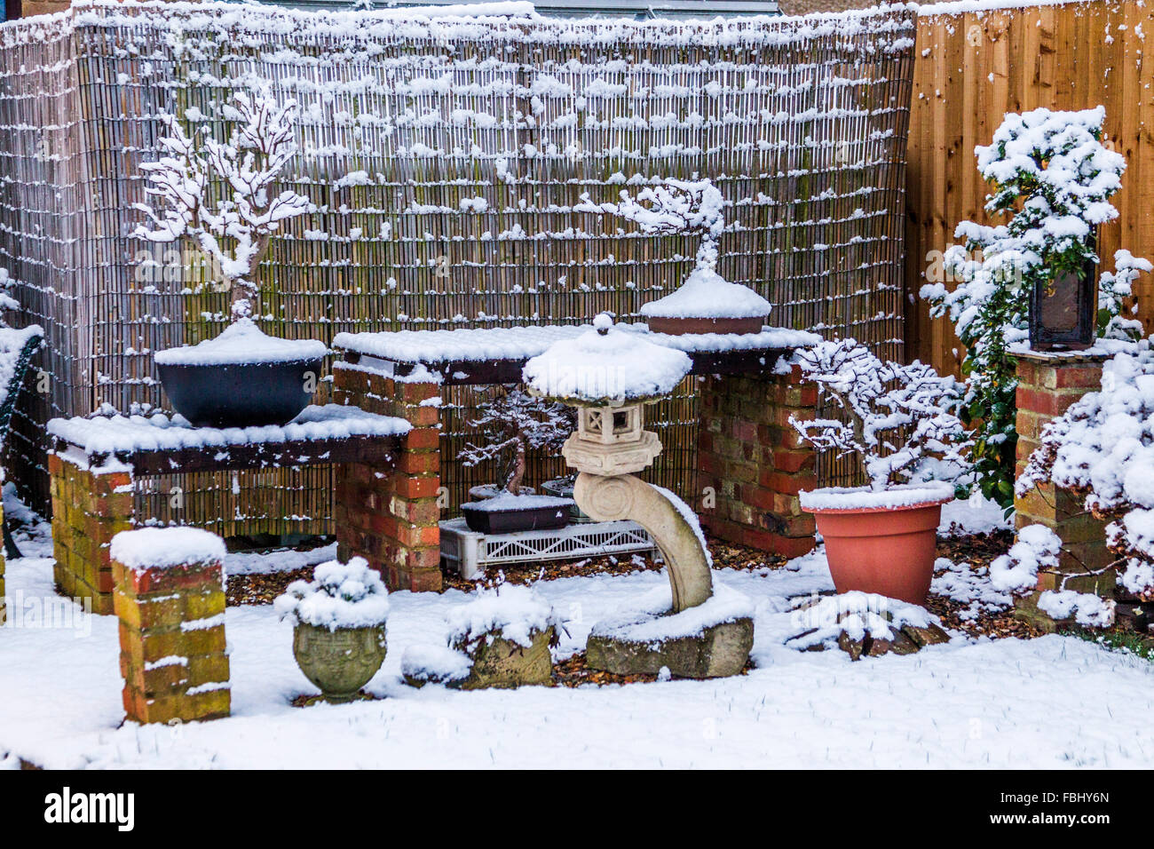 Northampton, UK. 17th January 2016.  Bonsia display covered in show which has fallen overnight. Credit:  Keith J - Stock Image