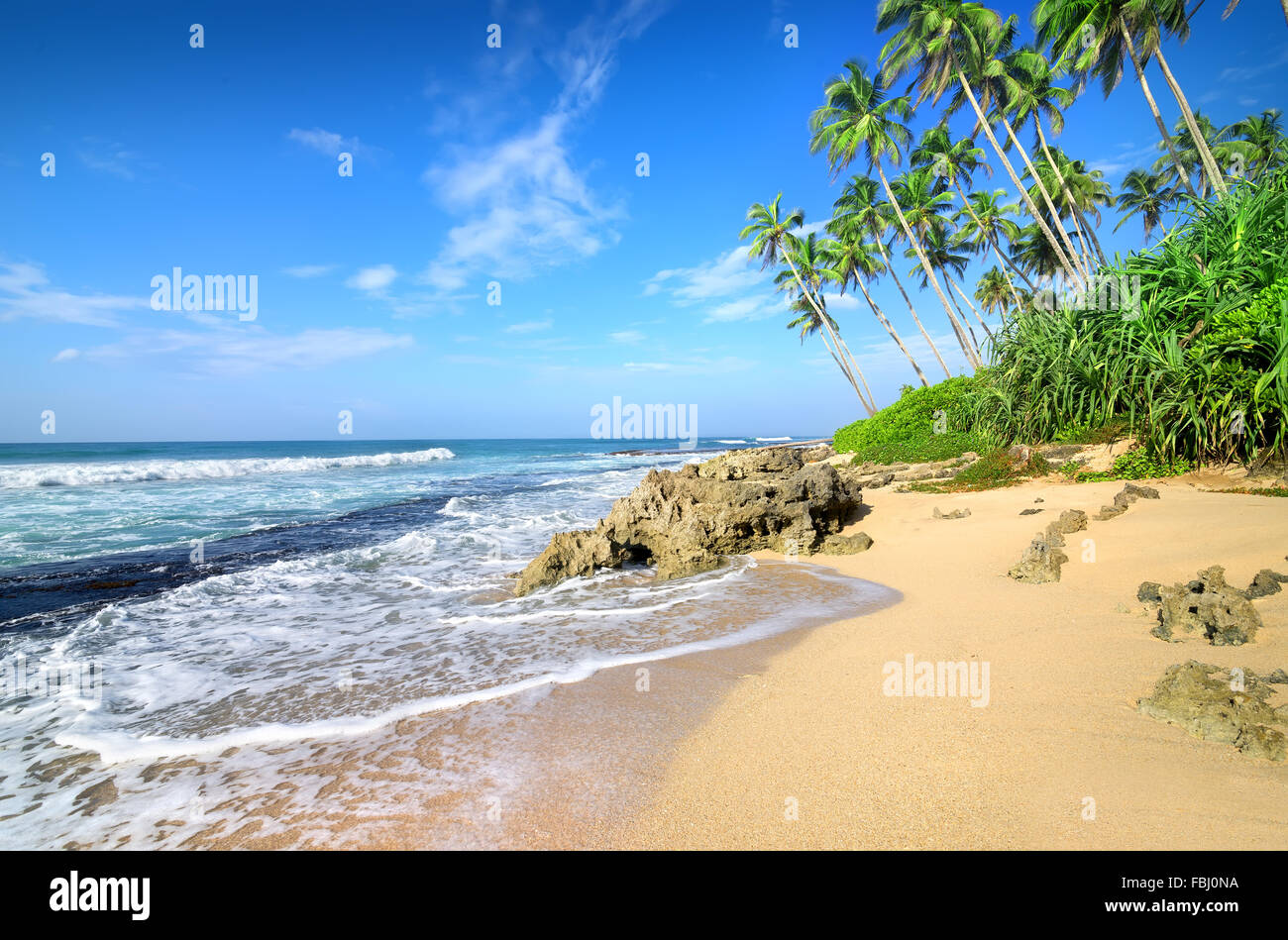 Green palm trees on the beach of Gala - Stock Image