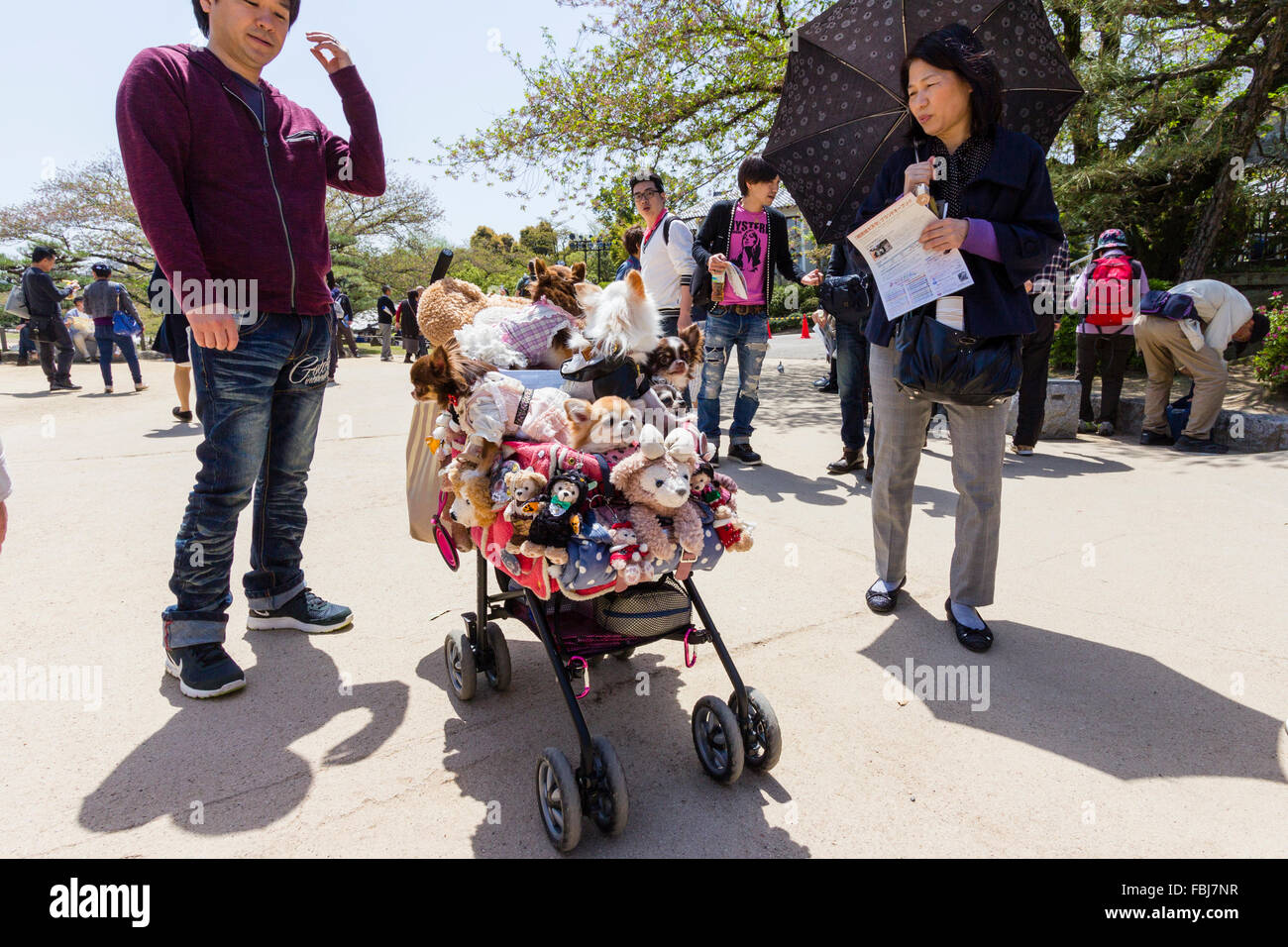 People gathered around pushchair filled with several 'pampered pet' dogs. A Japanese craze where dogs are - Stock Image