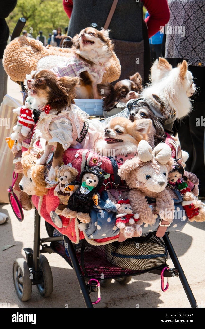 Japan, Himeji. Japan craze, a child's pushchair with sides decorated with cuddly soft toys, in the chair several - Stock Image