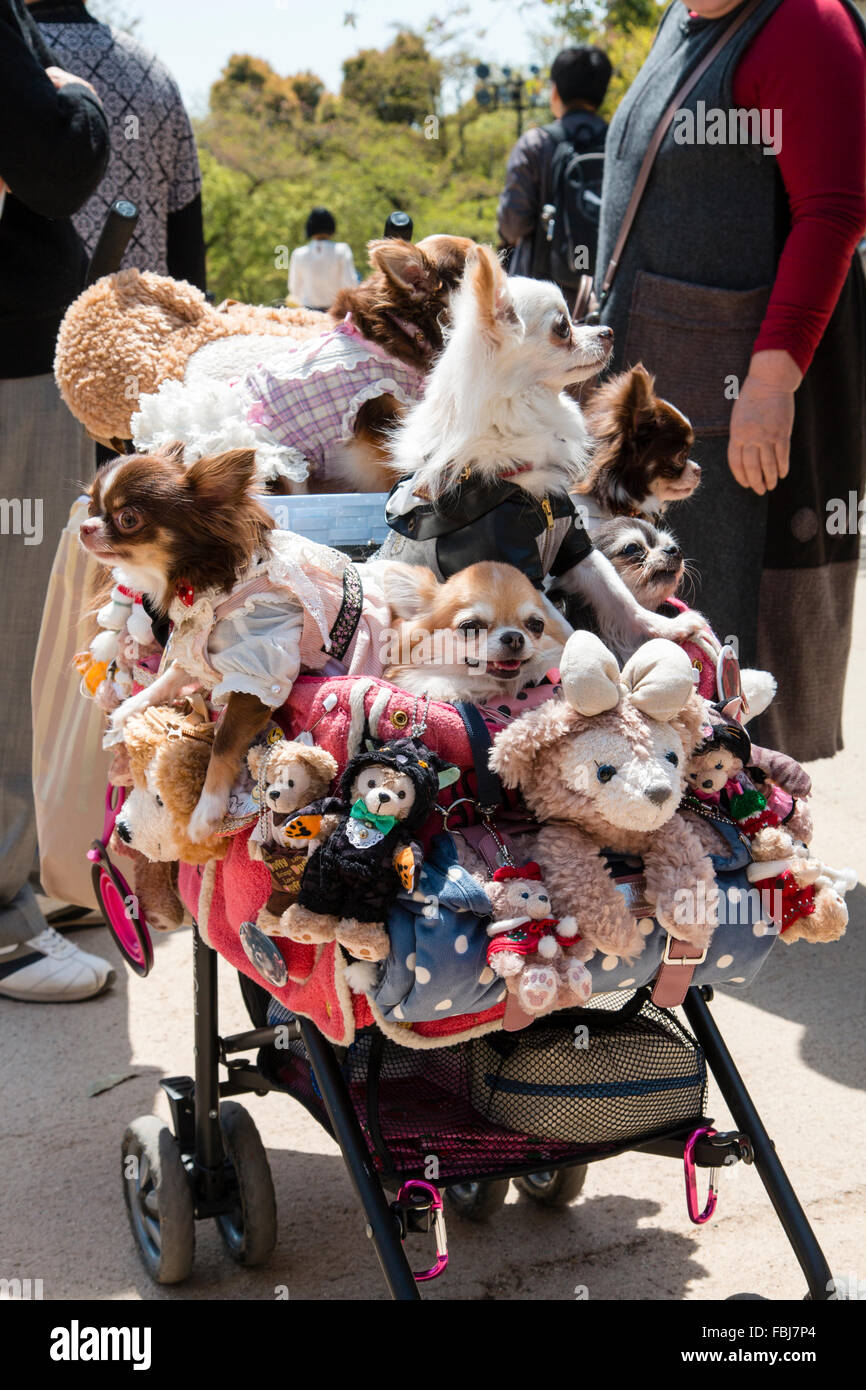 Japan, Himeji. Japan craze, a child's pushchair filled with various clothed pampered dogs, and cuddly bears - Stock Image