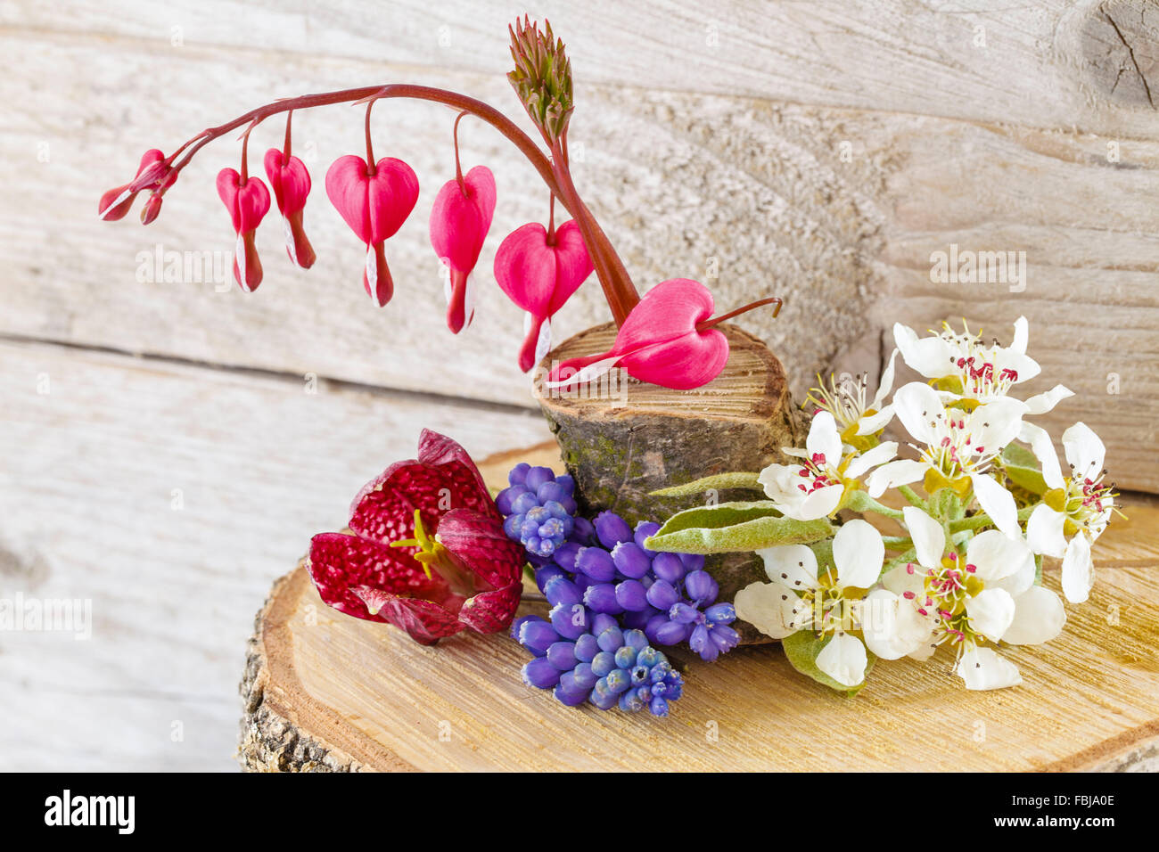 Still life with different fresh flowers bleeding heart chess stock still life with different fresh flowers bleeding heart chess flower pear blossoms grape hyacinths izmirmasajfo