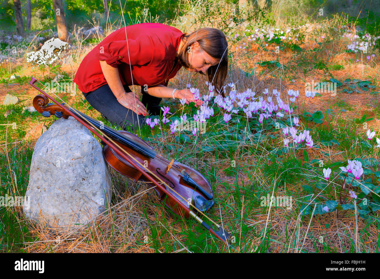Autumn evening in the forest, sun rays, through the trees, more light forest  glade. Girl has put violin and collects - Stock Image