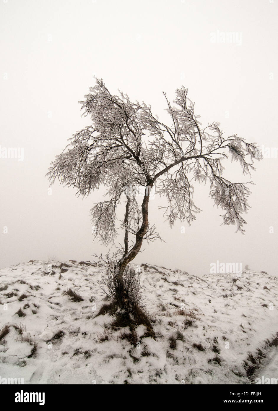 Wrekin, Shropshire, England, UK. A very foggy and wintry day at the summit. Plenty of snow and ice made for tricky - Stock Image