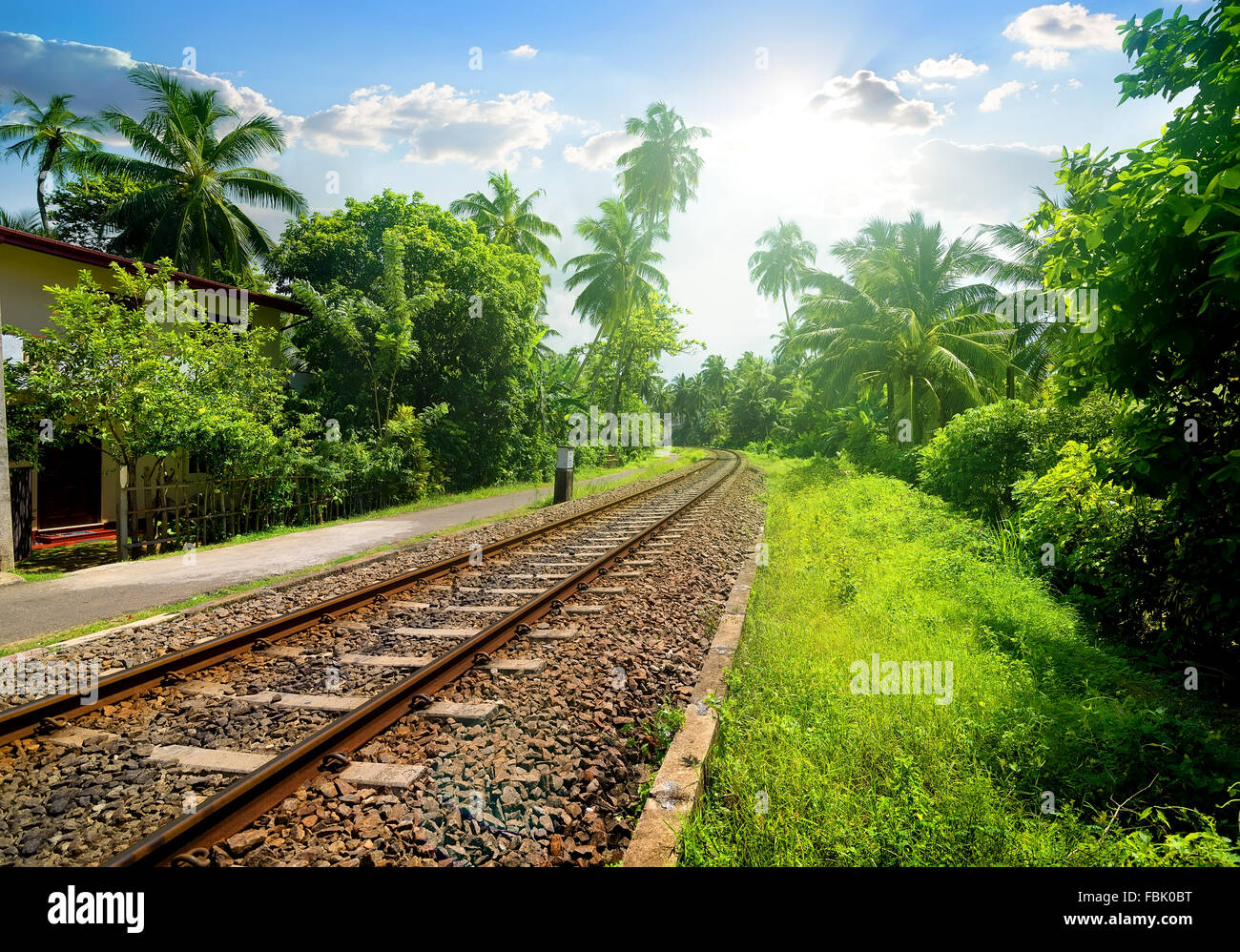 Railroad through green palm forest in Sri Lanka Stock Photo