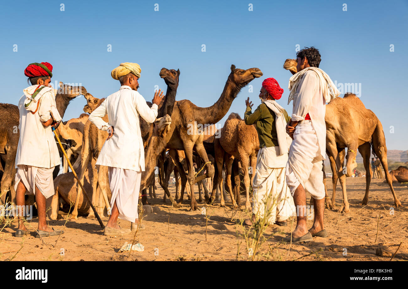 Camel traders discuss a deal during the annual Pushkar Camel Fair, Rajasthan India - Stock Image