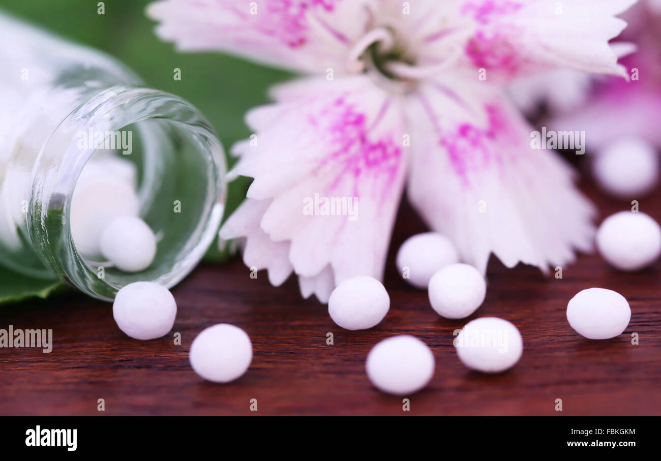 Close up of soem homeopathy globules with herbal flower - Stock Image