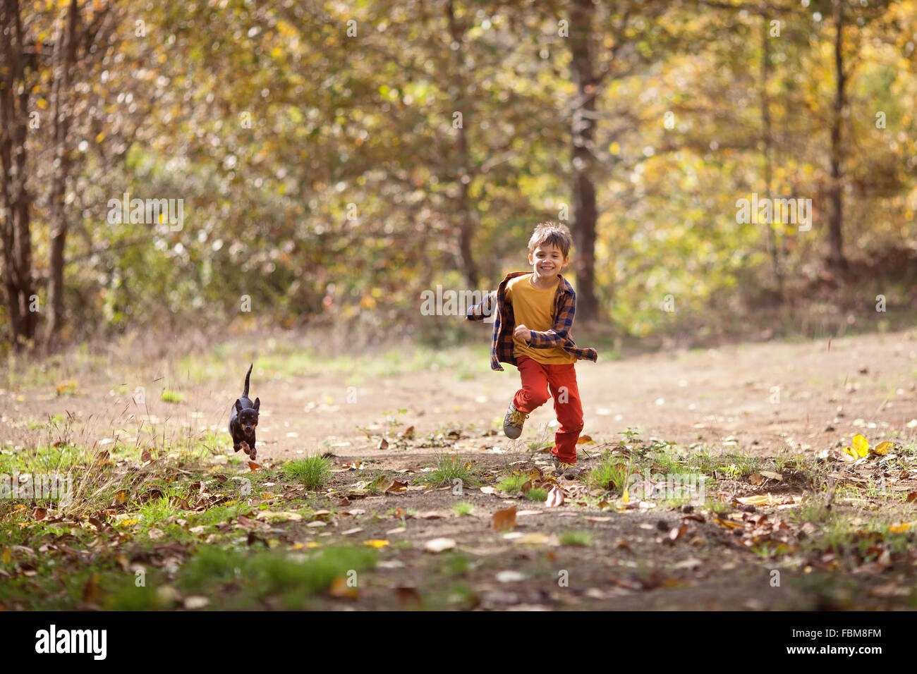 Boy chasing his puppy dog in the forest - Stock Image