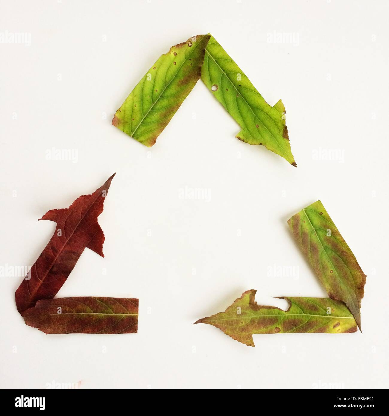 Recycling symbol made from autumn leaves - Stock Image