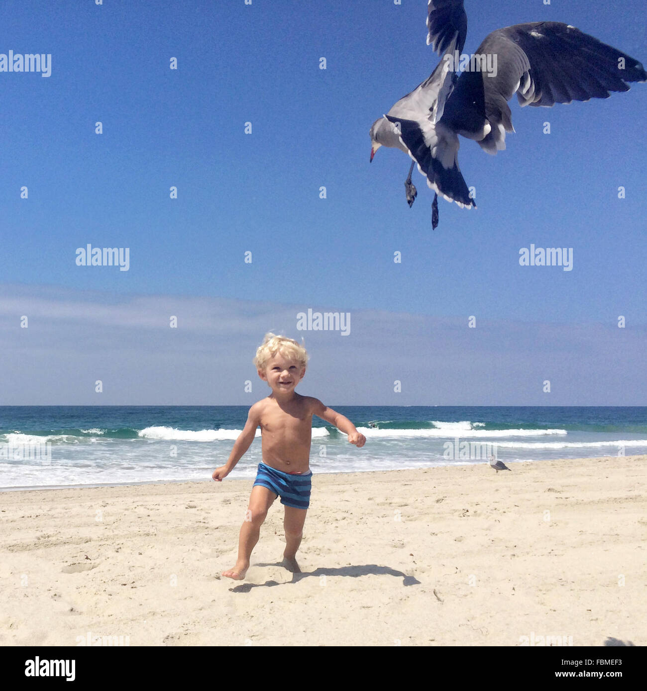 Boy chasing seagull on the beach - Stock Image