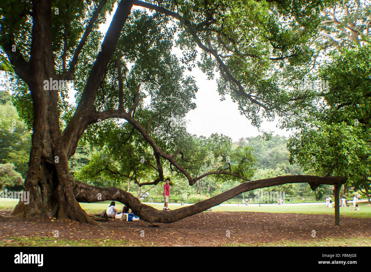 Kids Playing On Tree In Park - Stock Image