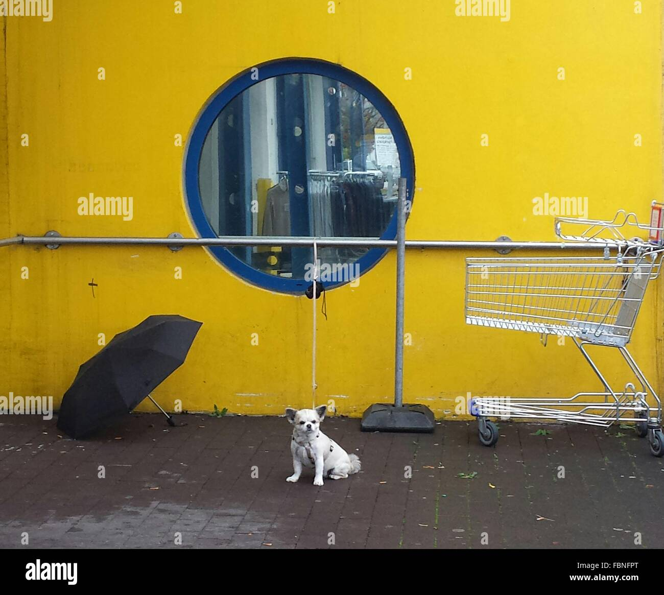 Dog Sitting Outside A Shopping Mall - Stock Image