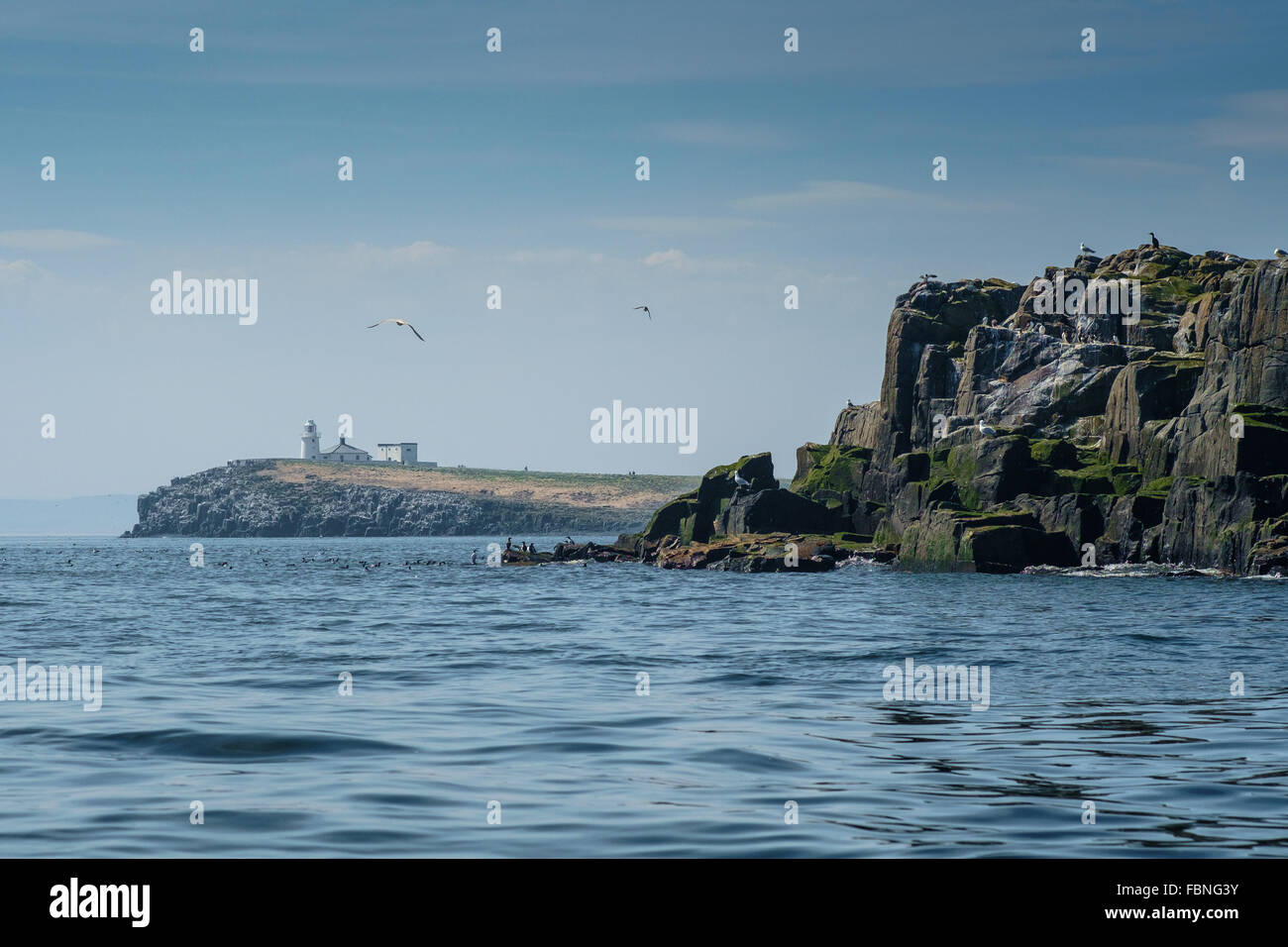 Farne islands, off the coast of Northumerland, England Stock Photo