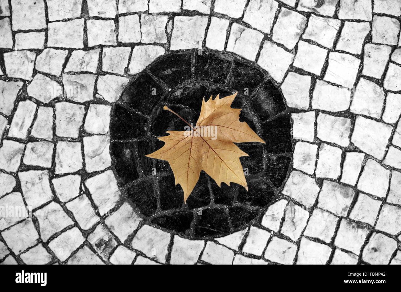 Dry Leaf On Cobblestone - Stock Image