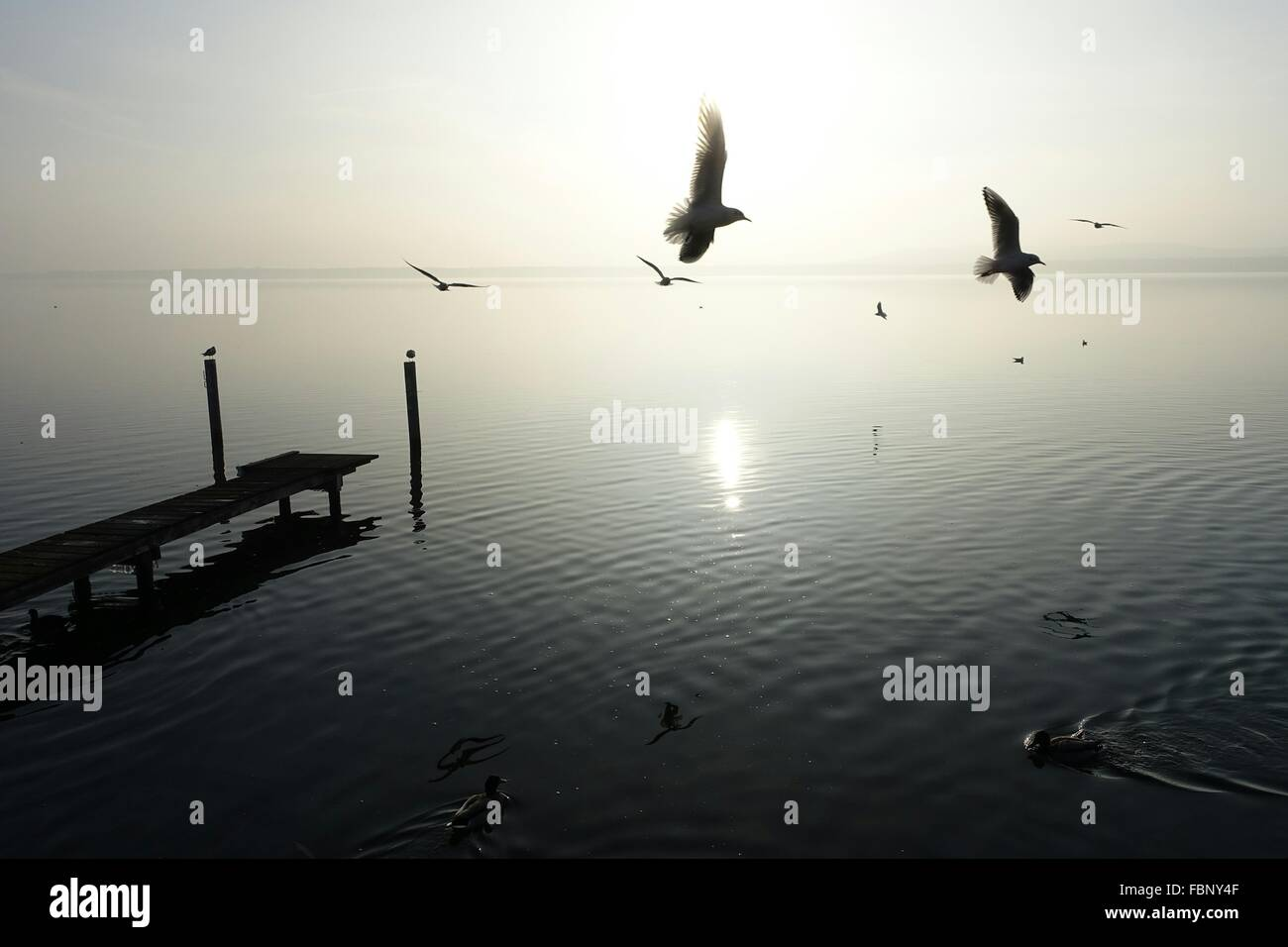 Bird Flying Over Lake - Stock Image