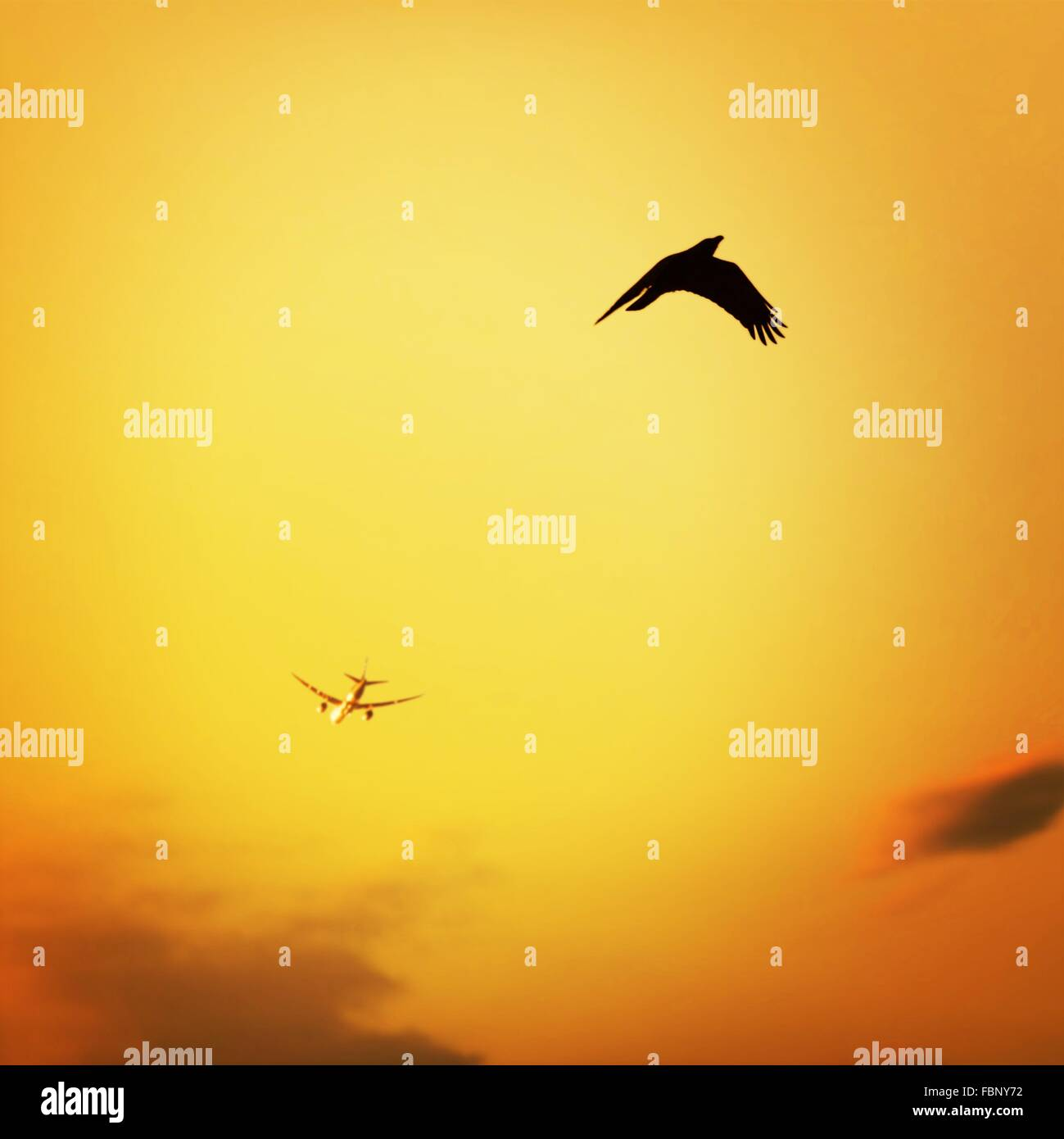 Low Angle View Of Airplane And Silhouette Bird Flying Against Orange Sky At Sunset - Stock Image