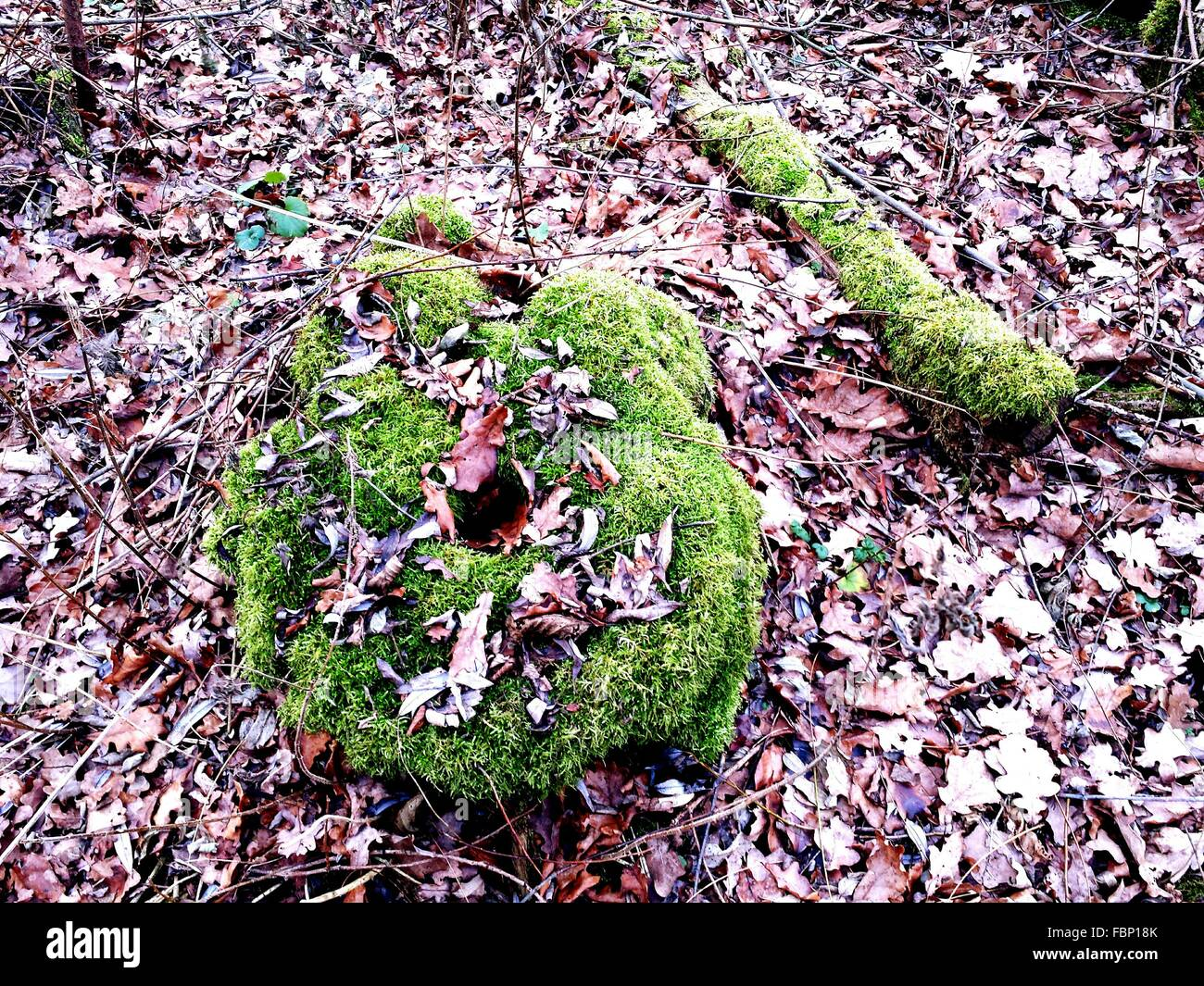 High Angle View Of Moss Covered Tree Stump In Forest Stock Photo
