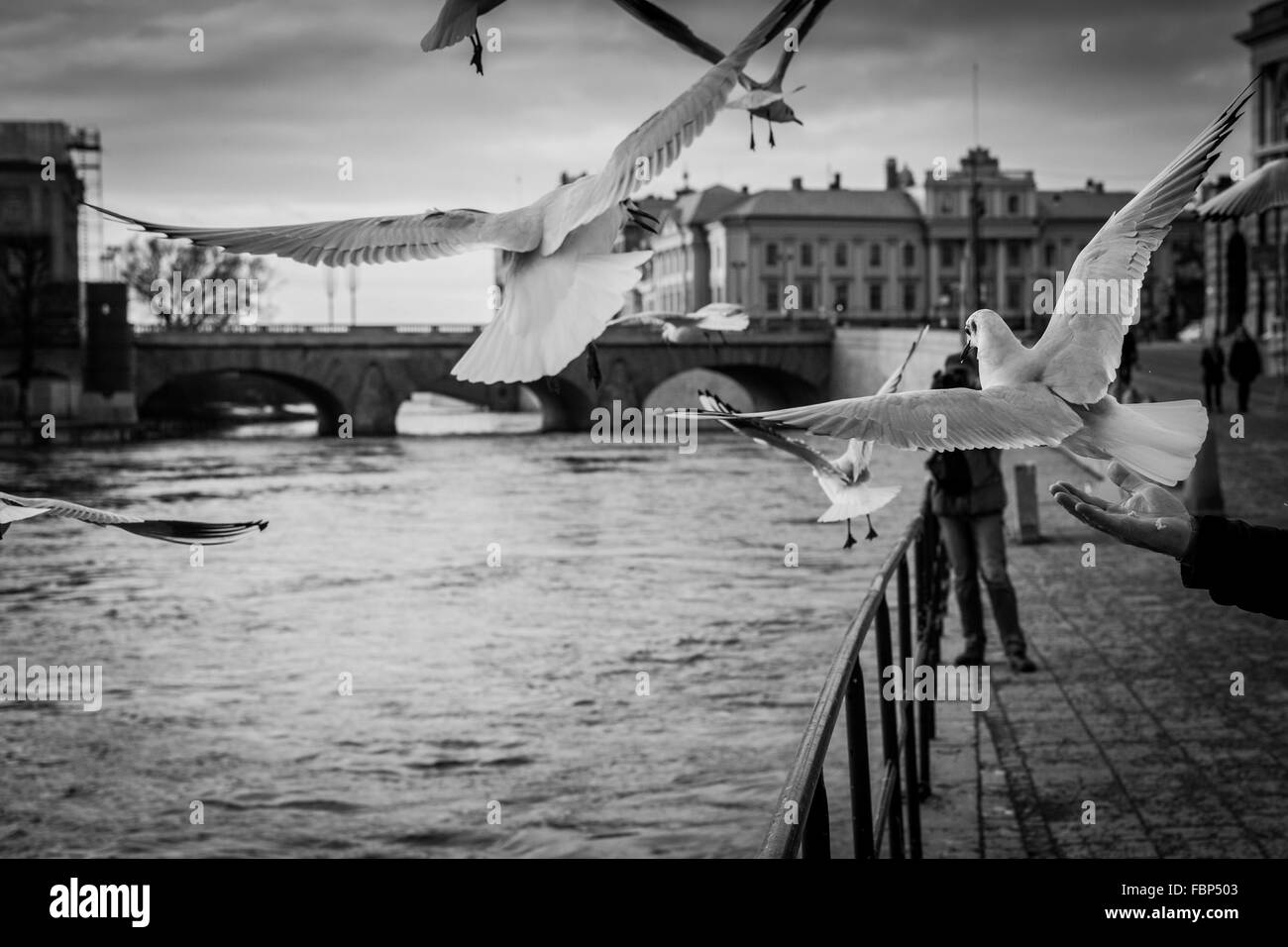 Flying Seagulls With Embankment And Bridge On Background Stock Photo