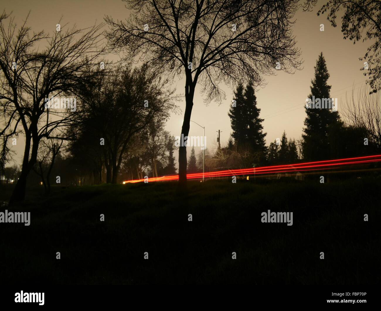 Light Trails Amidst Silhouette Trees Against Sky At Dusk - Stock Image