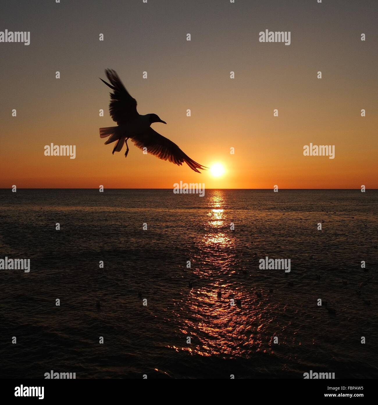 Silhouette Bird Flying Over Sea At Sunset - Stock Image