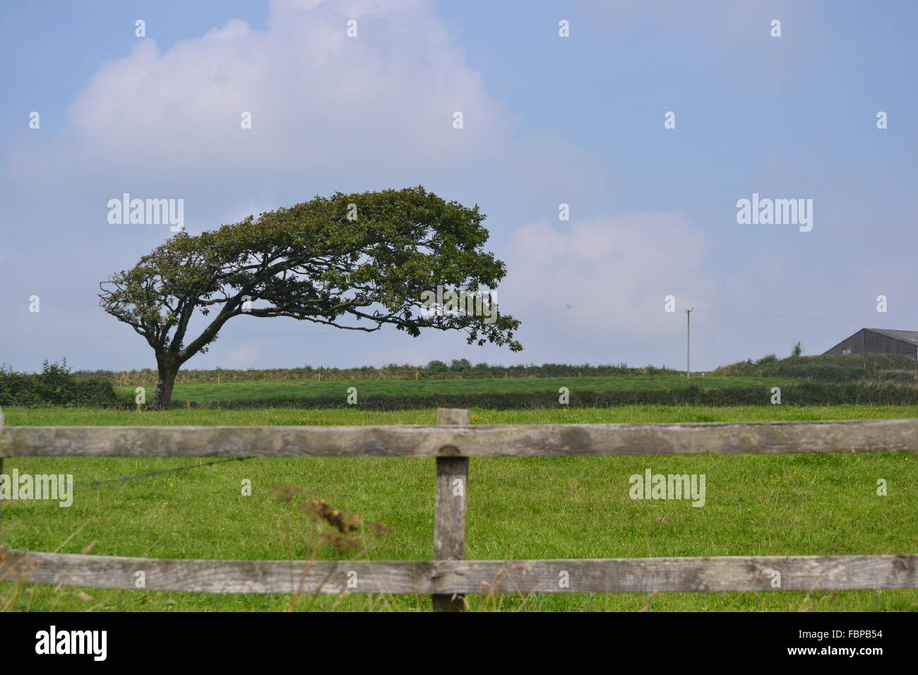 Tree warped by the wind - Stock Image