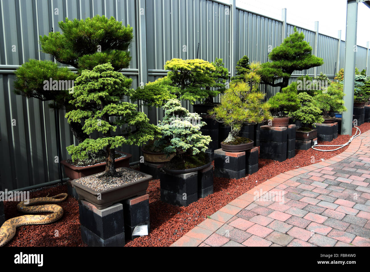Varieties of bonsai for sale in a nursery Stock Photo
