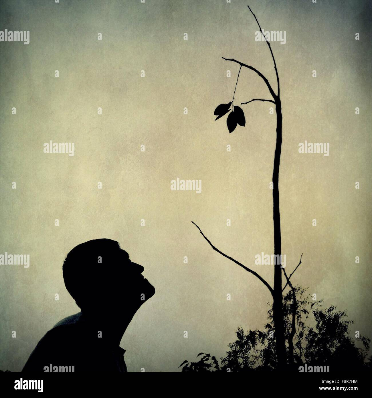 Silhouette Man Watching Leaves Against Sky - Stock Image