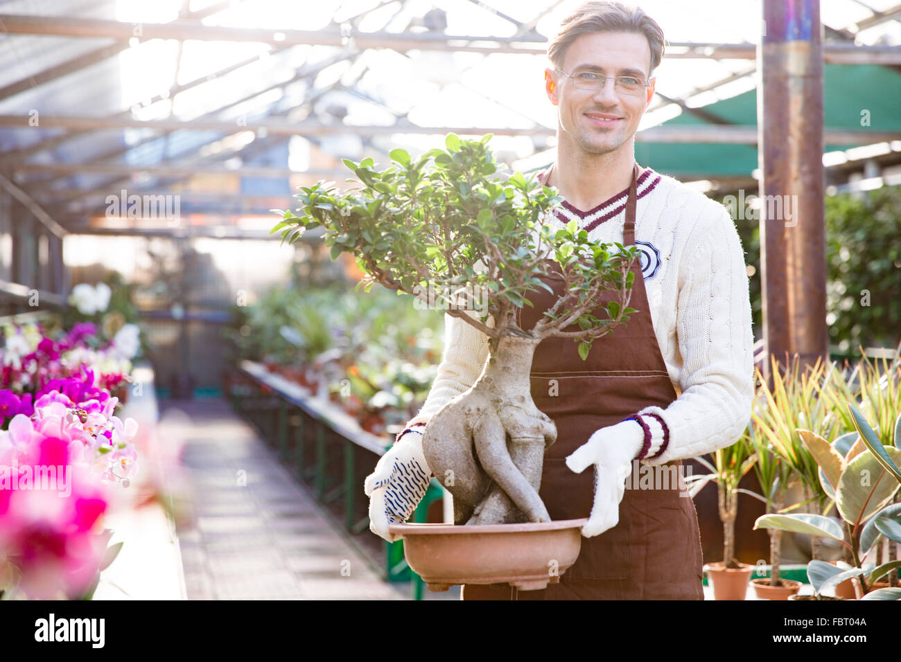 Portrait of attractive happy male gardener in apron and gloves standing and holding bonsai tree in pot in garden - Stock Image