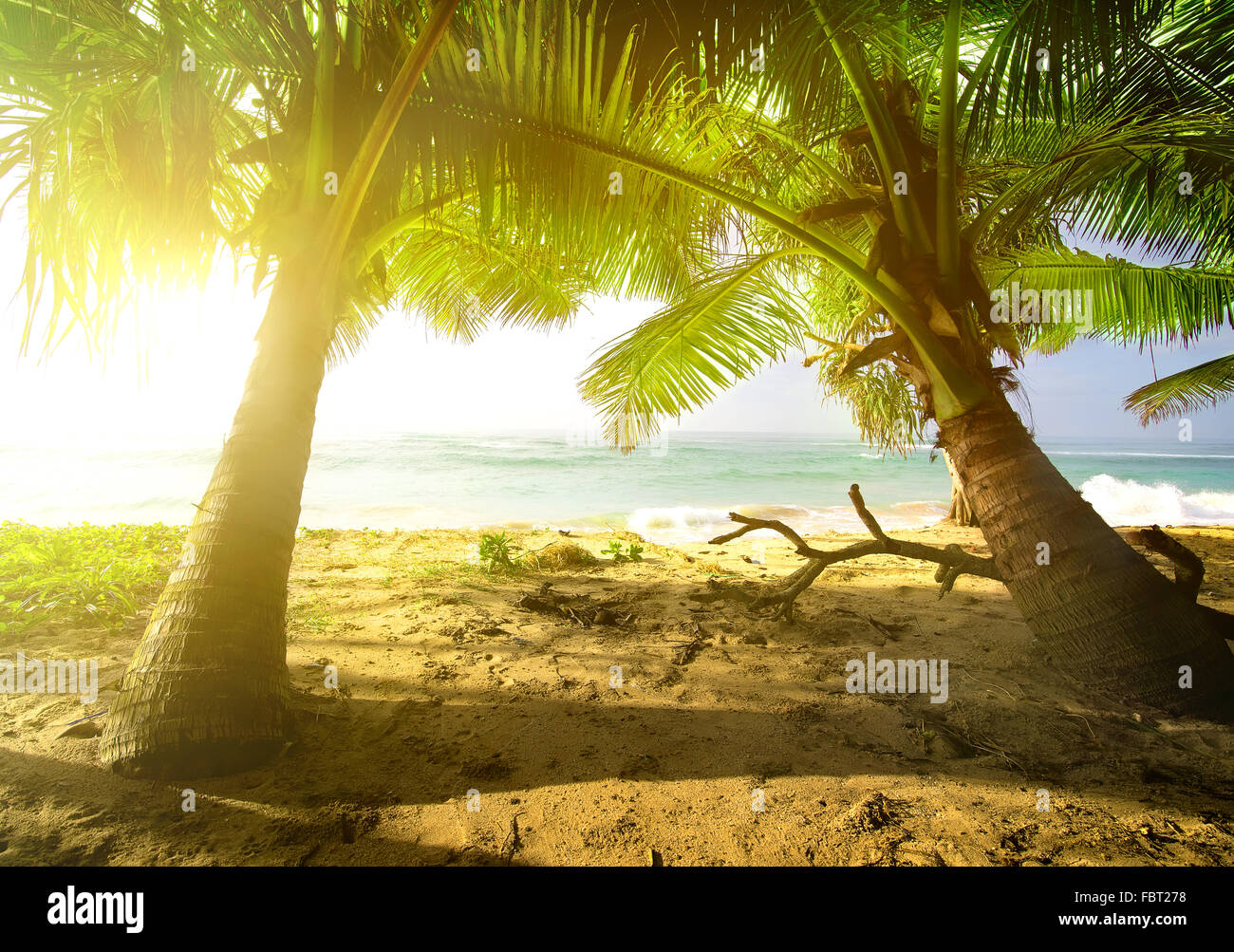 Palm trees and ocean at the bright sunrise - Stock Image