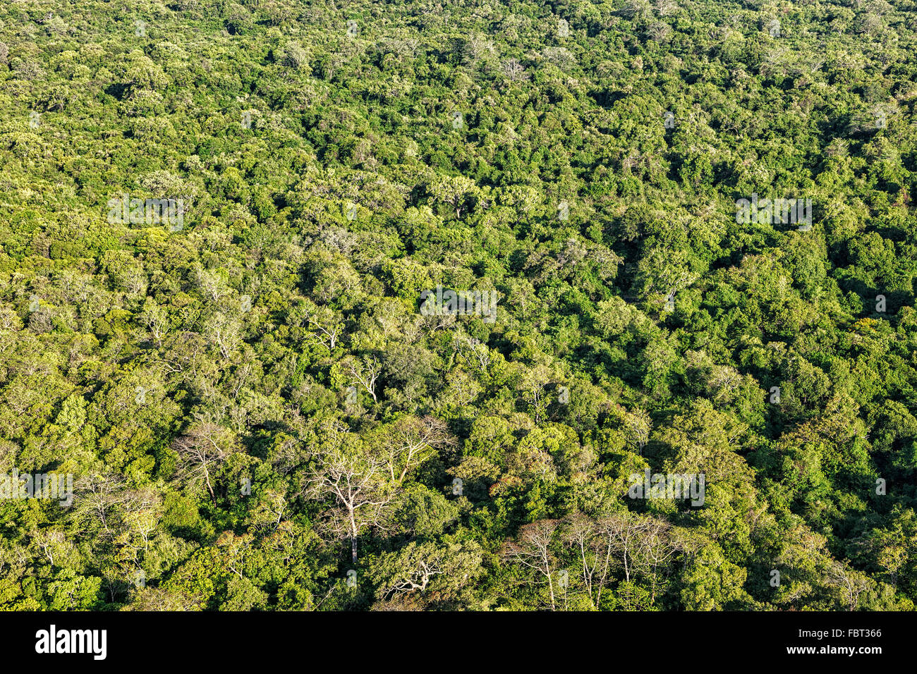 Aerial view of tropical forest - Stock Image