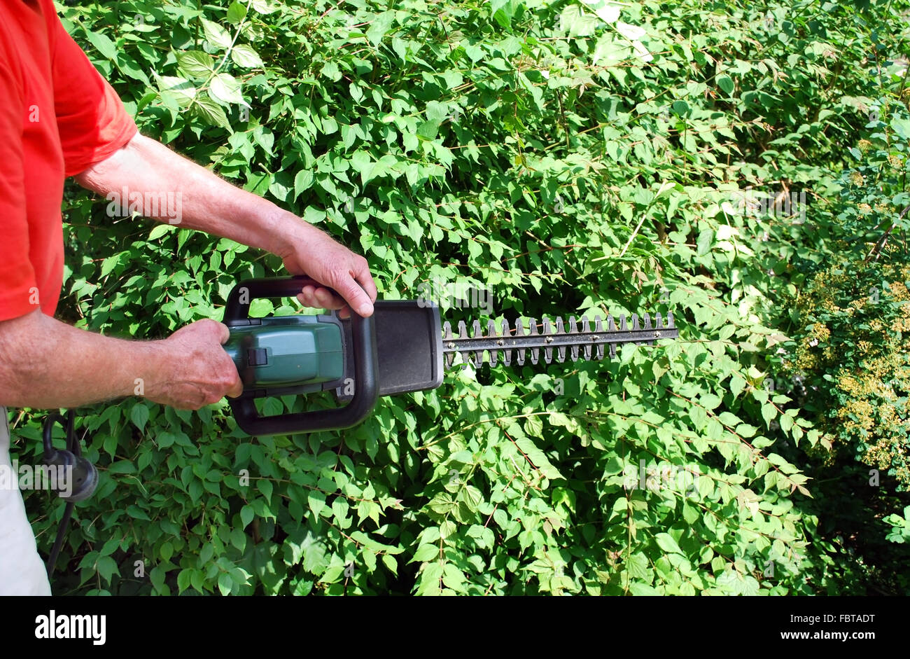 man with hedge trimmer Stock Photo
