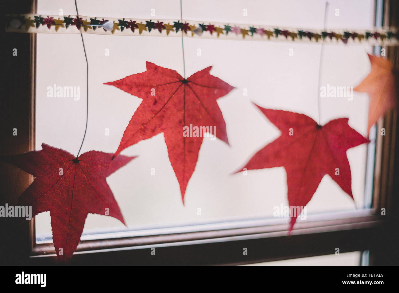 Ribbon with autumn leaves adorning a window - Stock Image